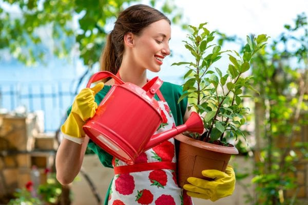 Great tips for watering potted plants Your Garden December 2020