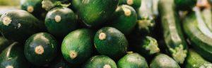 Seven handy tips o how to grow tasty yummy zucchinis How to grow vegetables - zucchinis Handy Hints