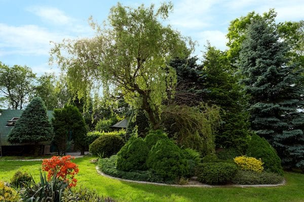 Tips on planting trees for summer shade