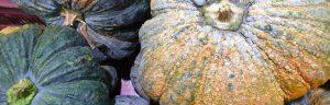 Seven handy tips on how to grow versatile, tasty pumpkins How to grow vegetables -pumpkins Handy Hints