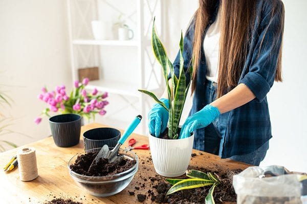 Seven handy tips on how to prepare your soil for successful autumn planting