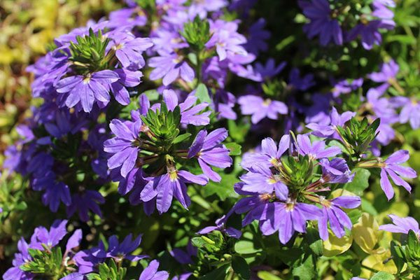 Plants for an Aussie native pot Your garden this month -September 2021