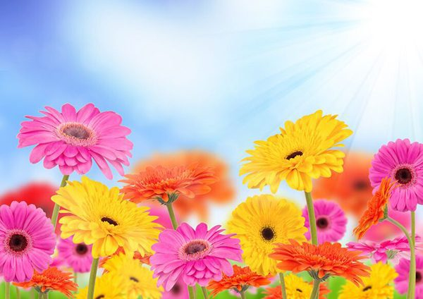 4 top tips for looking after Gerberas Pour garden this month -October 2021